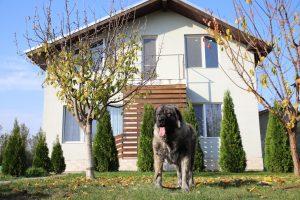 Shepherd Caucasian Female Guarding her house