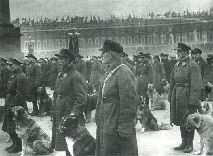 Histoire des chiens de Berger du Caucase