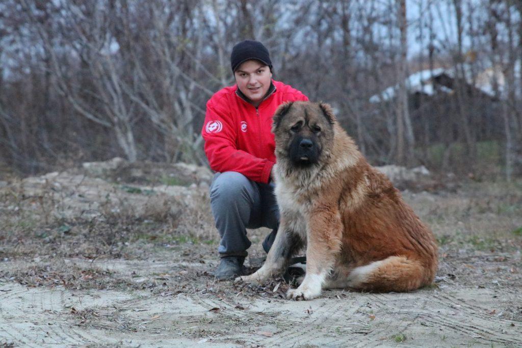 La Saint Valentin avec votre chien