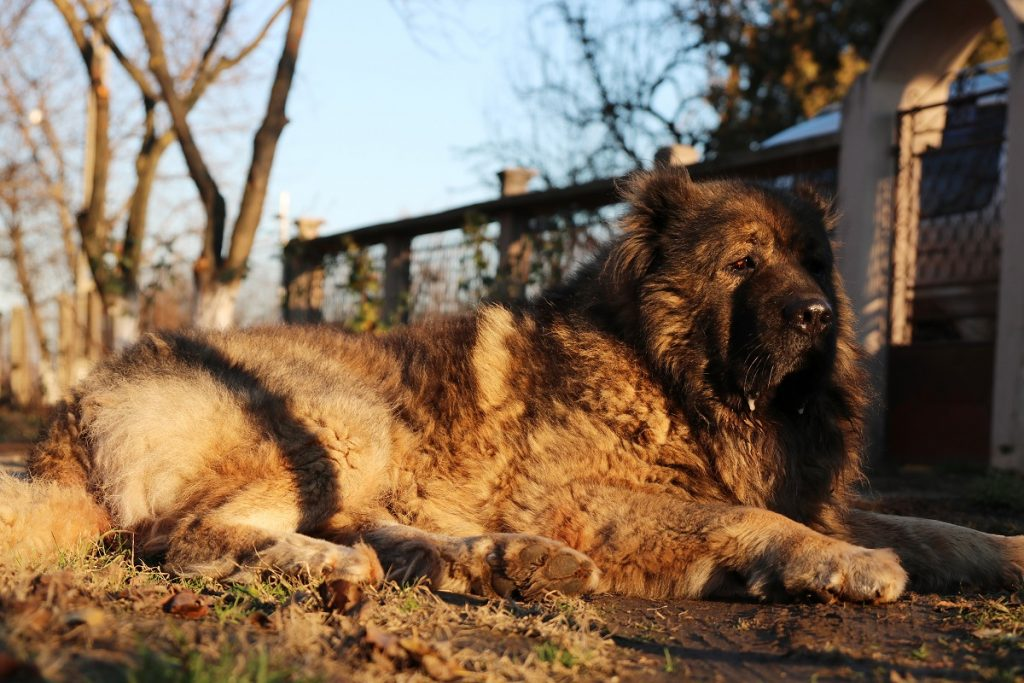 Le ronflement chez les chiens