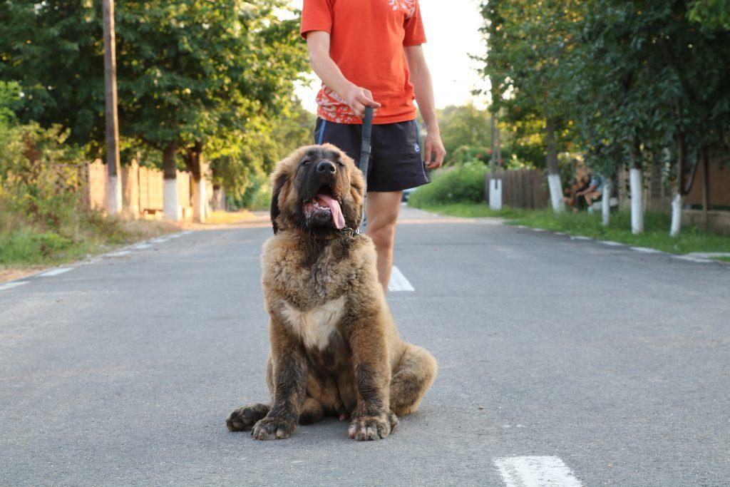 voyage avec un chien